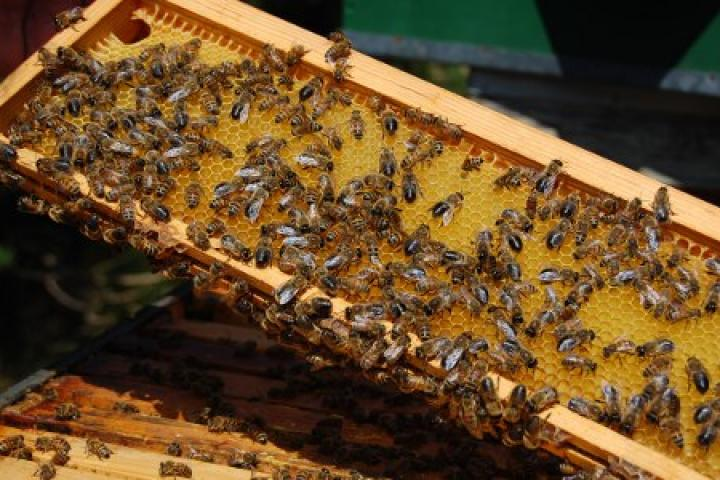 Afbeeldingsresultaat voor honing